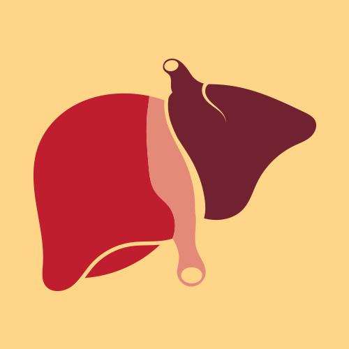 Zinc and liver
